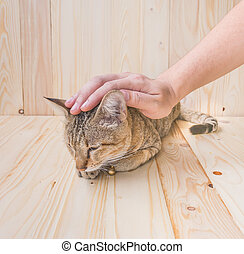 cat and human hand  on wood background