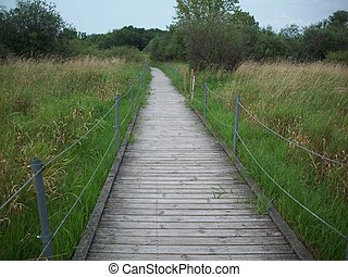 Boardwalk in the Wetland - Boardwalk in the wetland