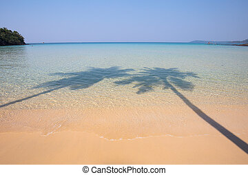 Two coconut palm tree shadow on the tropical beach - Coconut...