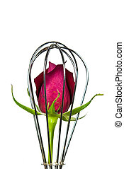 Isolation - Red rose in wire wisk.