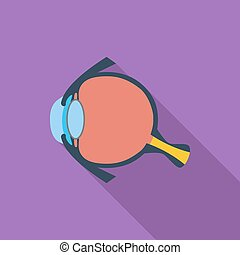 Anatomy eye - Anatomy eye icon Flat vector related icon with...