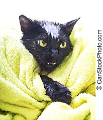 Black Cute soggy Cat after a Bath - Black Cute Soggy Cat...