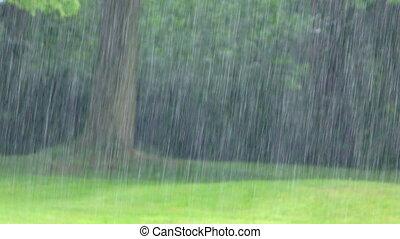 The Rain in Nature