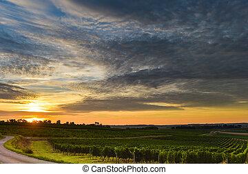 Vineyard Sunrise - Landscape-Bordeaux Vineyard - Vineyard...