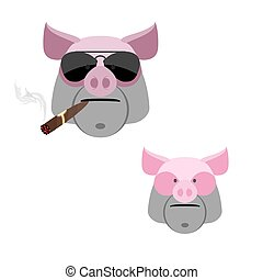 Pig with a cigar Scary and angry Boars head on a white...