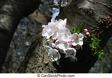 Tree Trank and Blooming Flowers in Spring