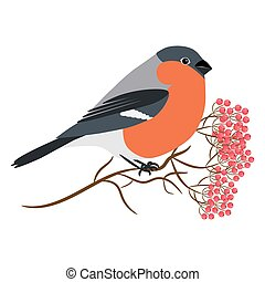 Bullfinch isolated on white vector Sitting at a rowanberry...