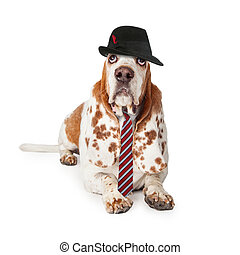 Funny Basset Hound Businessman - Funny photo of a Basset...