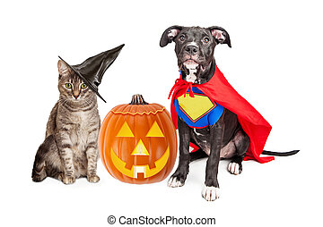 Halloween Puppy and Kitten With Pupmkin - Cute cat dressed...