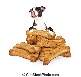 Hungry Puppy With A Pile Of Big Treats