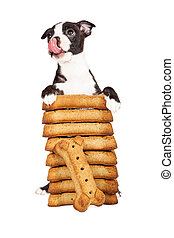 Hungry Puppy With A Stack Of Big Treats