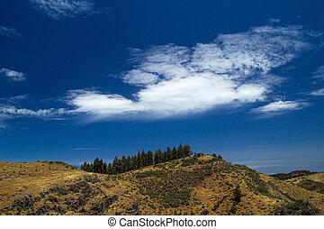 Gran Canaria, route Cruz de Tejeda - Artenara, canarian pine...