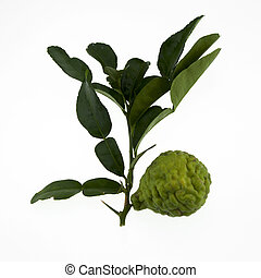 bergamot - Bergamot on white background