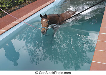 swimming horse in horse\'s swimming pool