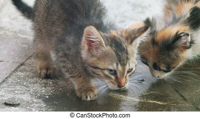 Two kittens is lapping water on concrete floor. Water drops...