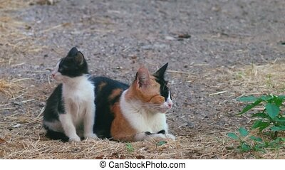 Calico mom-cat and her black and white kitten. - Feral cats...