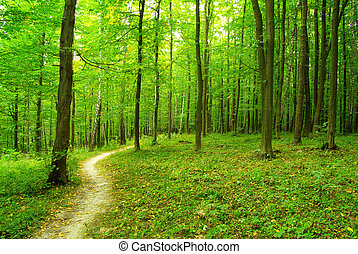 nature - a path is in the green forest