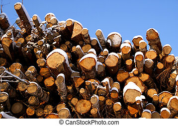 Spruce and Birch Wood Energy