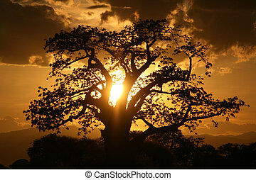 African Sunset Tanzania, Africa - Tarangire National Park -...