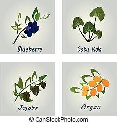 Collection of Herbs . Natural Supplements. Argan, Gotu Kola,...