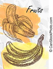 Banana fruits vector illustration.