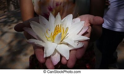 White water lily in pond