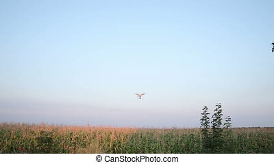 Flight Quadrocopters Over Corn Field Handheld Quadrocopters...