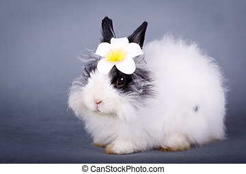 rabbit - dwarf rabbit