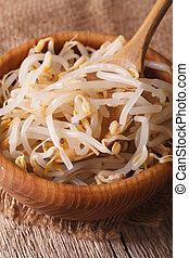 Raw bean sprouts mung macro in a wooden bowl vertical - Raw...