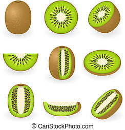 Kiwi - Vector illustration of kiwi fruit