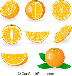 Oranges - Vector illustration of oranges