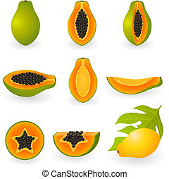 Papaya - Vector illustration of papaya