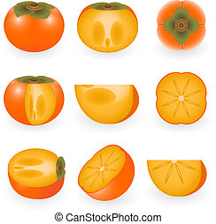 Persimmon - Vector illustration of persimmon