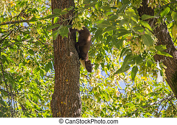 The pine marten - Forest marten among green leaves and...