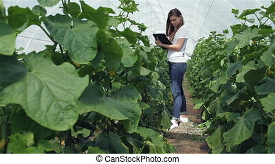 Girl agronomist makes notes between the green rowsYoung...