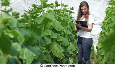 Agronomist with clipboard inspect the leaves and makes...