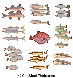 set of different fish flat style, color vector illustration