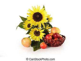 Flowers sunflowers and ripe apples on a white background