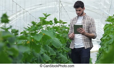 Guy with the tablet slowly inspect plants. Young agronomists...
