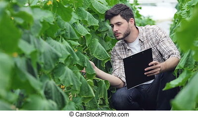 Guy sitting between the green rows with clipboard inspect...