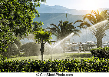lawn irrigation system for watering the vegetation at dawn -...
