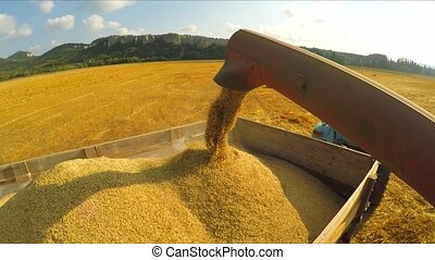 Harvester Unloading Grains Into Trailer - CLOSE UP: This is...