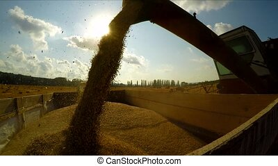 Combine Harvester Unloading Grains - CLOSE UP: Tracking shot...