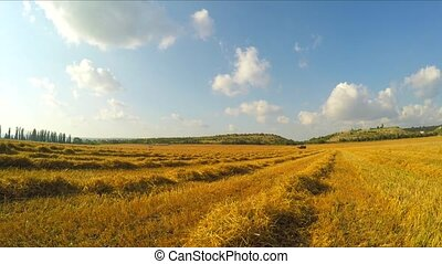 Stripes Of Stubble Hay Lying On Yellow Field - Camera is...