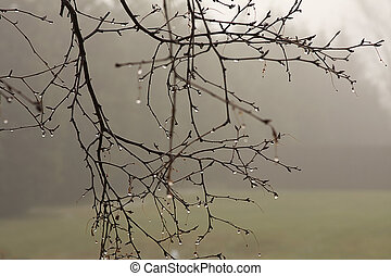 Misty Morning - Branches hanging with dew drops hanging on a...