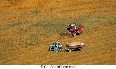 Grain Combine And Tractor Harvesting In Golden Field