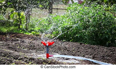 Watering garden equipment.