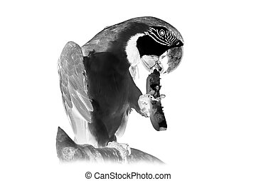 Black and white portrait of parrot ara. Invert image on...