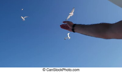 A view over the boats deck - A man feeding seagulls flying...