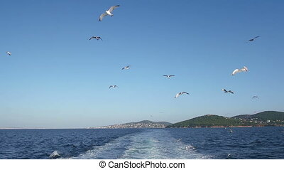A view over the boats deck - Group of seagulls flying behind...